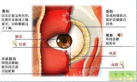 跟着医学生学习解剖眼睑结构