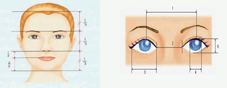 眼角在哪个位置图解