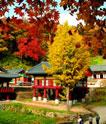 物美价廉的韩国医疗旅游很诱人